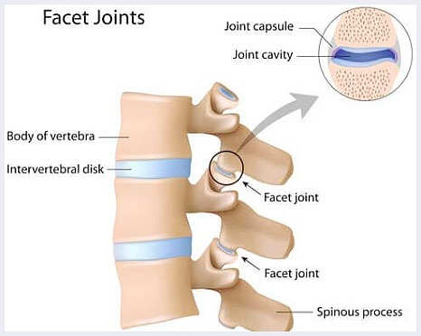 fact-joints-image